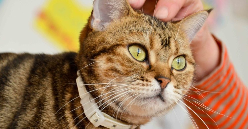 COVID risk for pets
