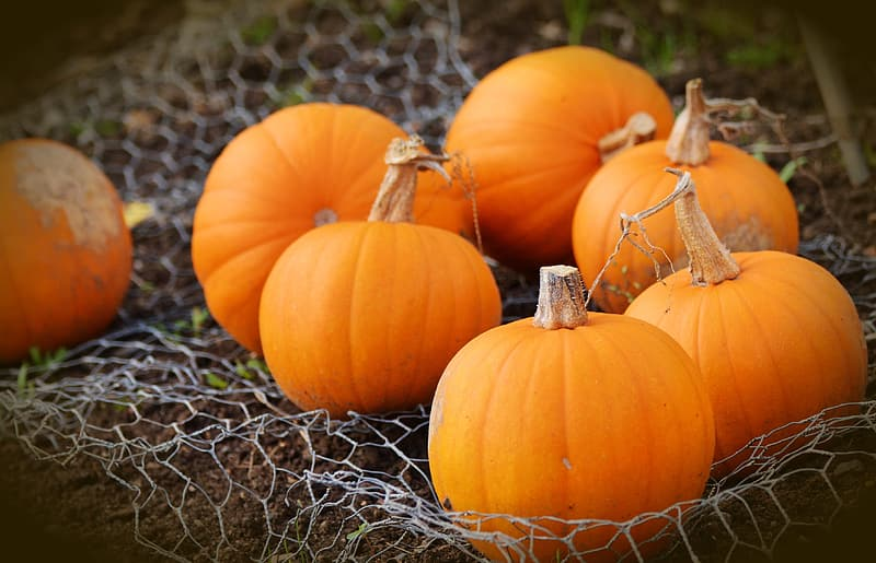 Pumpkin is full of essential minerals like zinc and potassium. Foods keeping  your hair thicker and healthy,  start hair re-growth.