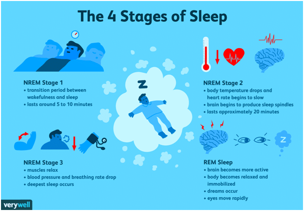 Stages of sleep. It is a science based study. Picture by verywell.